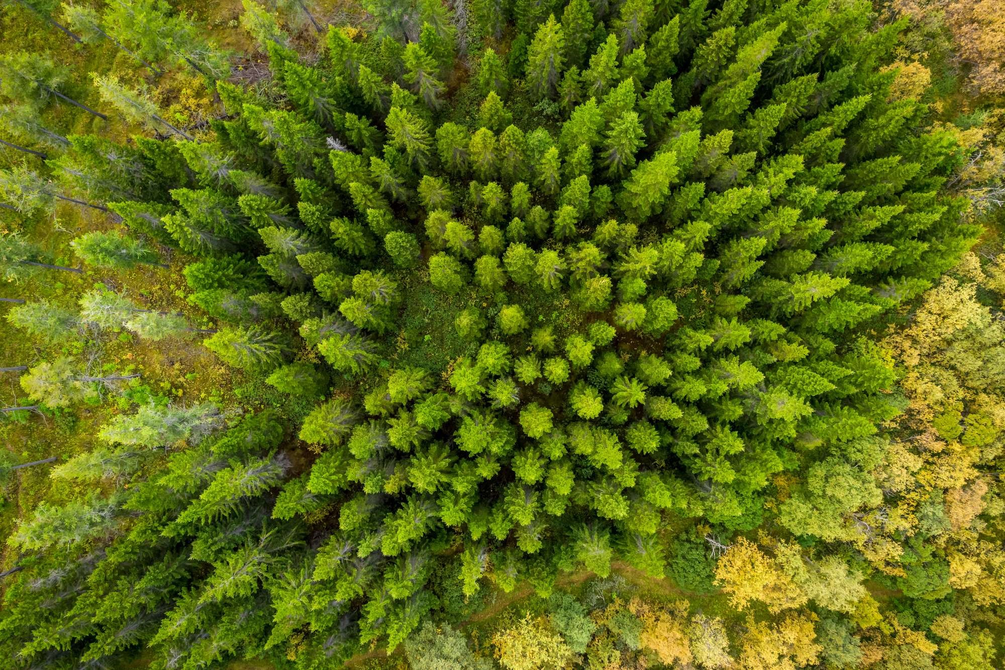 iceland-forest-rth (provided by Discover the World)